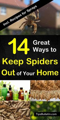 14 Great ways to keep spiders out of your home naturally - with recipes for homemade peppermint and vinegar repellant sprays. Quick and natural DIY ways to get rid of spiders at home, garage, basement, porch or yard. Keep Spiders Away, Get Rid Of Spiders, Plants That Repel Spiders, Deep Cleaning Tips, Cleaning Hacks, Cleaning Recipes, Natural Spider Repellant, Porches, Funny Stuff