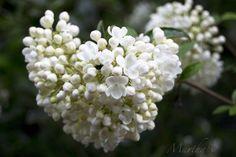 Blumen zum Königinnentag.