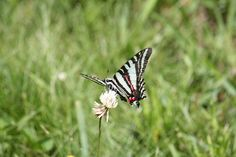 I love butterflies, don't you? I watch for them in gardens, yards, and on walks. However, I don't love butterflies in my stomach. Butterflies In My Stomach, I Don T Love, Inspirational Blogs, Butterfly, Butterflies