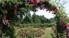 Lodging & Attractions OR : Oregon Interactive Corp. Oregon Flower, Heirloom Roses, Willamette Valley, Local Attractions, Flower Farm, Pacific Northwest, Lodges, Vineyard, Things To Do
