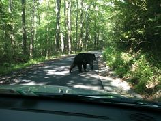 Drive the Roaring Fork Motor Nature Trail - watch out for the Black Bears