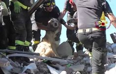 Romeo a été sauvé par les pompiers, dix jours après le séisme à Amatrice.