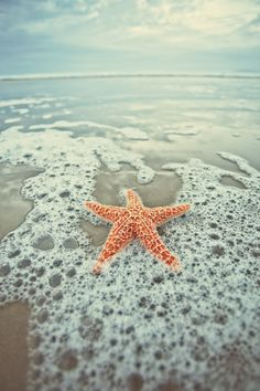 Starfish experience-tells-you-what-to-do-confidence-allows-