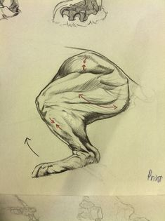 http://benlinalexander.blogspot.com/2015/08/lion-anatomy-back-leg.html