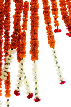 Marigold flowers are traditionally used at an Indian Wedding. The saffron color is considered to be auspicious. Vibrant Indian Wedding by Donna Newman Photography Chang Marie I think this is gorgeous especially for a farm wedding :) Marigold Wedding, Marigold Flower, Orange Wedding, Flower Garlands, Flower Decorations, Hanging Flowers, Indian Flowers, White Flowers, Fall Flowers