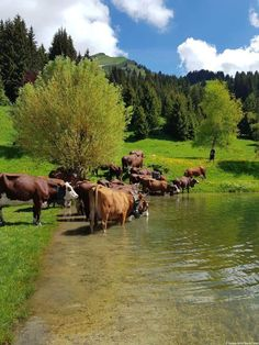 Country Life, Country Girls, Small Cow, Cow Pictures, Old West, Phone Covers, Livestock, Cattle, Farm Animals