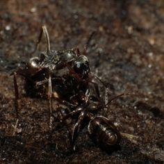 Killing Ants Inside Natural Way
