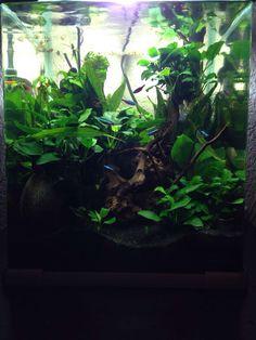 Prachtig aquarium van 1 van onze klanten