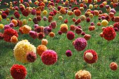 Yarn Bomb Pom Poms! What a field of wonderful color and surprise.