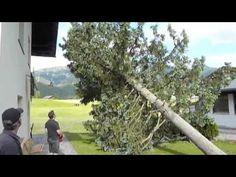 Last Tree standing @ Haus Jonghof