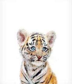 Baby tiger print Safari animal prints PRINTABLE nursery art