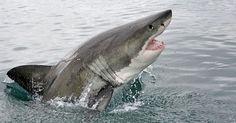 spelletje : zwarte haai ipv zwarte pieten (trekken bij je buur,2 dezelfde mag je afleggen, als je overblijft met zwarte haai ben je verloren;)