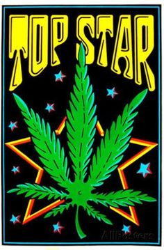 Top Star Blacklight Poster by Scorpio Posters, inc. Copyright 2002 Dimensions: x inchesIdeal decor for lounging or partying Posters glow brightly under UV backlights High quality flocked poster Backstock Weed Posters, Cannabis Wallpaper, Stoner Art, Black Light Posters, Weed Art, Beautiful Flowers Wallpapers, Star Wars, Hippie Art, Psychedelic Art