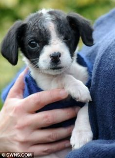 poor little puppy was abandoned in a car park, Bob was suffering from a ruptured eyeball which was so bad it had to be removed.   People who do this should be locked up for life