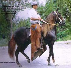 Beautiful Horses, South America, Pony, Baroque, Horses, Cute Horses, Equine Art, Horse And Rider, Pretty Horses