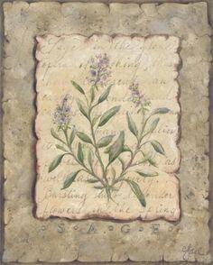 Vintage Herbs Sage (Constance Lael)
