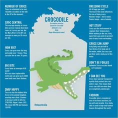 Crocodiles are found throughout the Northern Territory's Top End. There are a number of great tours around Darwin and Kakadu that let you see these amazing creatures up close in a safe environment. Crocodile Facts For Kids, Saltwater Crocodile Facts, Crocodile Pictures, Crocodile Craft, Australian Crocodile, Australian Animals, Types Of Crocodiles, Animal Dictionary, Crocodiles