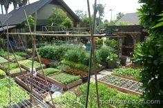 Allotment inspiration - phenomenal crop yield from just m using the square foot method. Veg Garden, Edible Garden, Garden Beds, Urban Agriculture, Urban Farming, Urban Gardening, Organic Gardening, Farm Gardens, Outdoor Gardens
