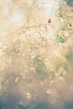 mlodzikova-magic-plant-12.jpg (800×1198)