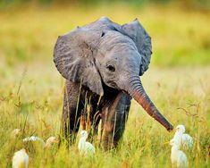 elephants에 대한 이미지 검색결과