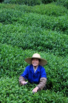 Tea plantation in Hangzhou. Last week to submit a photo to our photo contest!