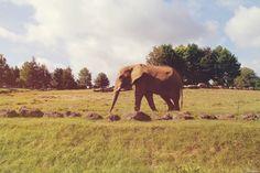 Eléphant | 11 août 2014