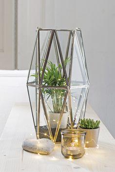 Plaats eens een groen plantje in een glazenwindlicht