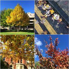 Autumn colours on campus