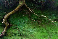 True Root -
