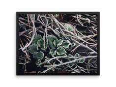 Entangled Photography Print | Botanical Wall Art | Nature Photography | Leaves & Vines | Cheap Posters | Large Wall Art | Boho Home Decor