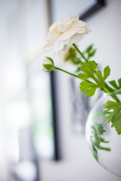 #flowervase #hangingball #serax