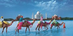 Would love to experience the culture and sights of India