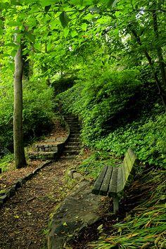 Falls Park, an urban oasis // Greenville SC
