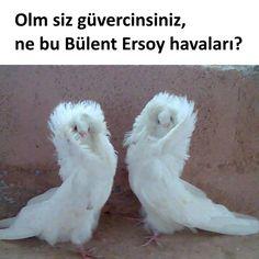 Olm siz güvercinsiniz, ne bu Bülent Ersoy havaları? #mizah #matrak #espri #komik #şaka #gırgır #sözler #güzelsözler #komiksözler