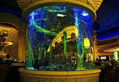 cool aquarium - Google Search