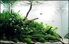 """Little Green Hill"" by Vladimir Rastovac  October 2009 Aquascape of the Month"
