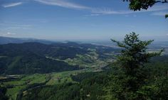 The black forest and climate change. As the climate change progresses, droughts are expected to become more and more common and more intense in Europe, as in many parts of the globe. However, many plants are not able to handle this kind of climate. This includes the Norway spruce, which is Germany's most important commercial tree species and accounts for the majority of trees in the Black Forest. Firs might have to be planted as replacements