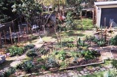 Permaculture gardens do not happen overnight. When deciding to start a garden, do it where your planning to grow roots (literally and figuratively).