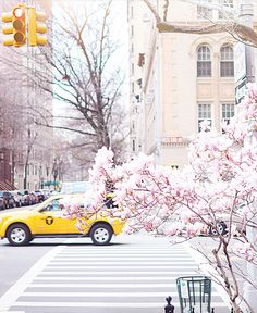 Wow, New York City, NY is so pretty in spring this pink blossom tree against a yellow taxi near Central Park makes me so happy!