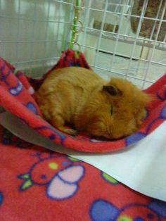 little hammock fan