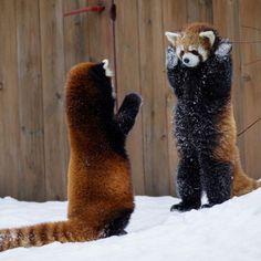 Sunday's Cuteness: Hands Up!