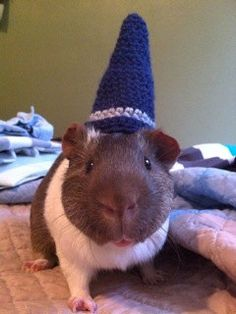 Wizard Guinea Pig Costume Hat  The Magical by iheartneedlework, $10.00