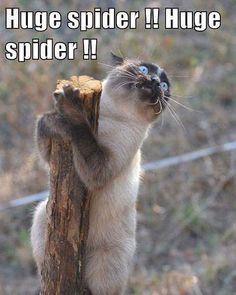 My hubby when I tell him there's a spider in the house! #lol