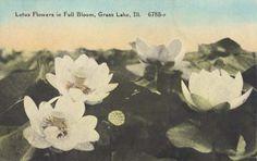 [2001-3-23+Lotus+Grass+Lake.jpg]