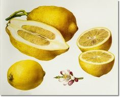 Love that lemon!