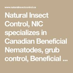 Natural Insect Control, NIC specializes in Canadian Beneficial Nematodes, grub control, Beneficial Insects, good bugs to control bad bugs. Organic, environment friendly products for home, garden, orchard and farm.