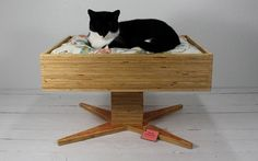 Upcycled pet beds 14 Fresh Start for Vintage Suitcases: Pet Furniture from Atomic Attic Pet Furniture, Vintage Furniture, Cat Tree House, Owning A Cat, Vintage Suitcases, Wall Accessories, Cat Sitting, Cool Beds, Upcycled Vintage