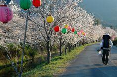 Shikoku Henro Trail  pilgrimroads.com/category/shikoku-88-temple-pilgrimage