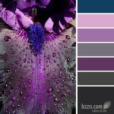 Purple flower petal