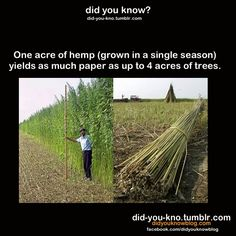 Doing more than you think. And FYI- Hemp IS different than weed/pot/marijuana. Hemp doesn't contain the THC that gets you high. The More You Know, Good To Know, Did You Know, Angst Quotes, Save Our Earth, Endocannabinoid System, My Sun And Stars, Wtf Fun Facts, Random Facts